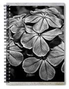 Plumbago In Gray Spiral Notebook