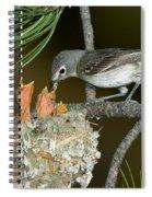 Plumbeous Vireo Feeding Chicks In Nest Spiral Notebook