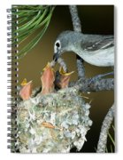 Plumbeous Vireo Feeding Worm To Chicks Spiral Notebook