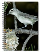 Plumbeous Vireo With Four Chicks In Nest Spiral Notebook