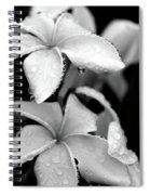 Plumeria Drip Spiral Notebook