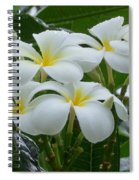 Plumeria In The Rain Spiral Notebook