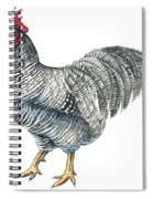 Plymouth Rock Rooster  Spiral Notebook