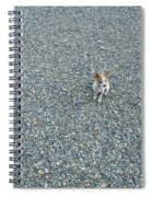 Poco Ponders The Possibilites Spiral Notebook
