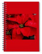 Poinsettia # 2 Spiral Notebook
