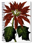 Poinsettia A Traditional Christmas Plant Vintage Poster Spiral Notebook