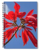 poinsettia from Madagascar Spiral Notebook
