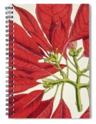 Poinsettia Pulcherrima Spiral Notebook