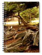 Point Lobos Whalers Cove Whale Bones Spiral Notebook