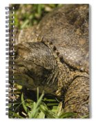 Pointed Nose Florida Softshell Turtle - Apalone Ferox Spiral Notebook