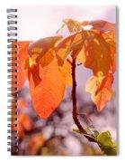 Poison Ivy Beauty Spiral Notebook