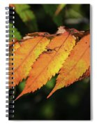 Poison Sumac Golden Kickoff To Fall Colors Spiral Notebook
