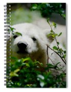 Polar Bear Cub Spiral Notebook