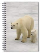 Polar Bear With Cub Spiral Notebook