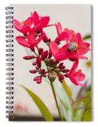 Polen Gathering Bee Spiral Notebook
