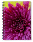 Polka Dot Purple Mum Spiral Notebook