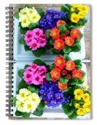 Polyanthus Primroses Spiral Notebook