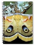 Polyphemus Moth Spiral Notebook