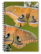 Polyphemus Moths Spiral Notebook