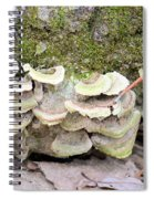 Polypore Abstract Spiral Notebook