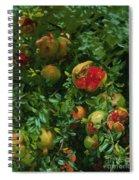Pomegranates    Majorca Spiral Notebook