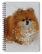 Pomeranian In Snow Spiral Notebook