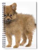 Pomeranian Puppy Dog Spiral Notebook