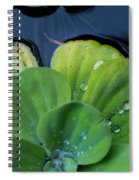 Pond Lettuce Spiral Notebook