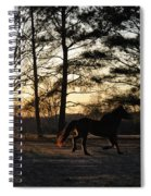 Pony's Evening Pasture Trot Spiral Notebook