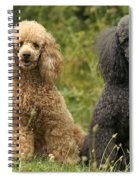 Poodle Dogs Spiral Notebook