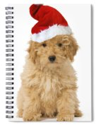 Poodle In Christmas Hat Spiral Notebook