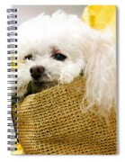 Poodle In Pouch Spiral Notebook