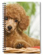 Poodle Spiral Notebook