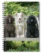 Poodles And Other Dogs On A Bench Spiral Notebook