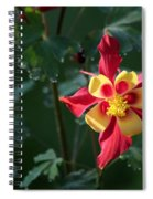 Pop Of Color Spiral Notebook
