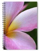 Pop Of Pink Plumeria Spiral Notebook