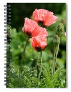 Poppies In My Garden Spiral Notebook