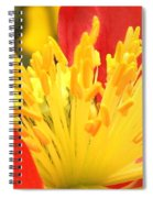 Poppy 3 Spiral Notebook