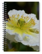 Poppy Adoration Spiral Notebook