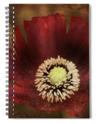Poppy At Days End Spiral Notebook