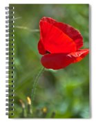 Poppy Blowing In The Wind Spiral Notebook