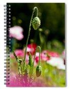 Poppy Getting Ready Spiral Notebook