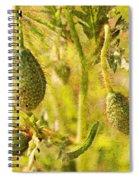 Poppy Pods Spiral Notebook