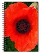 Poppy Of Remembrance  Spiral Notebook
