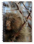 Porcupine And Berries Spiral Notebook