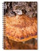 Poria Shelf Fungi 1 Spiral Notebook