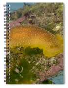 Porostome Nudibranch Spiral Notebook