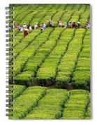 Porto Formoso Tea Gardens Spiral Notebook