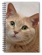 Portrait - Orange Tabby Cat Spiral Notebook