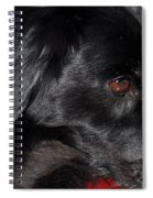 Portrait Of A Border Collie Spiral Notebook